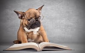 небычный библиотекарь
