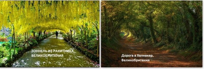 тоннель из деревьев