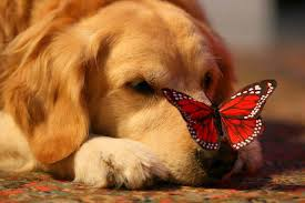 бабочка - символ души