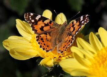 Открытка «Бабочка на цветке» » Сделай сам 3
