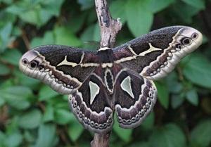 бабочка - символ духа