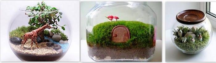 флорариум -сад в бутылке