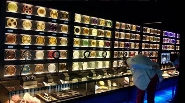 micropia музей микробов