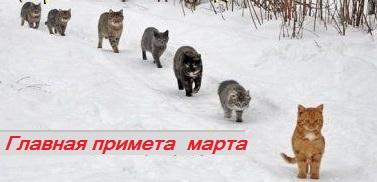 маровские коты