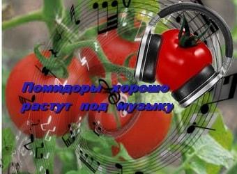 помидоры любят музыку