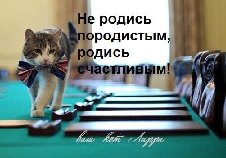 кот ларри день кошек