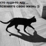 примета - черная кошка