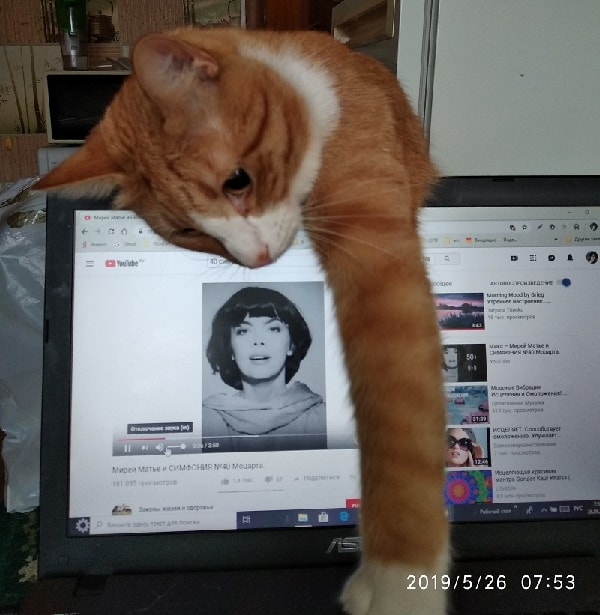 кот и компьютер
